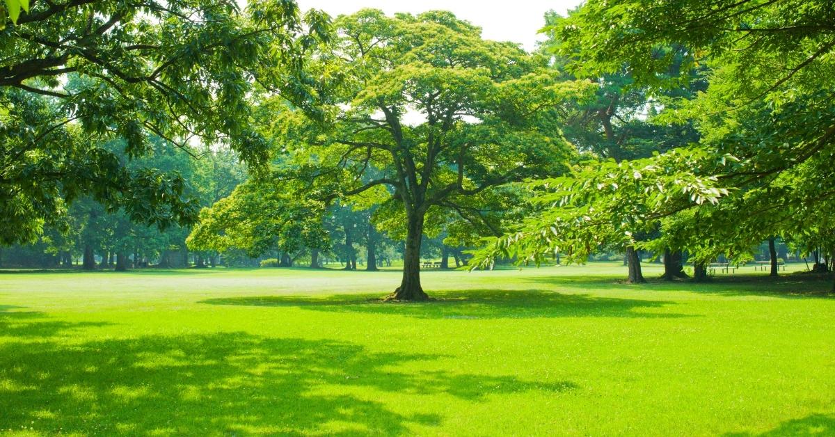 Lush, Gorgeous Green, Healthy Lawn in Woods Cross, UT