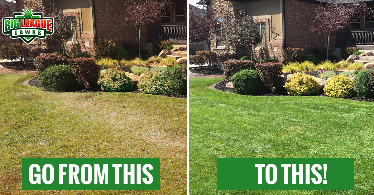 Before and After Fertilization - Big League Lawns Utah