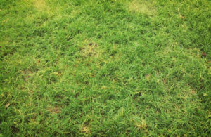 Grub Prevention & Grub Control Services for your Lawn in Utah